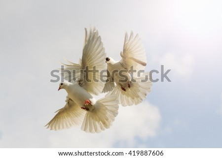 two white pigeons flutter against the sky interesting point, flying birds - stock photo