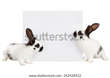 Two white rabbit with a white sheet of paper for text - stock photo