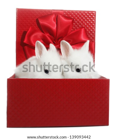 Two white rabbits bunnies in red gift box - stock photo
