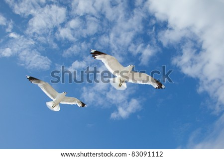 Two white sea gulls flying in the blue sunny sky over the coast of Baltic Sea - stock photo