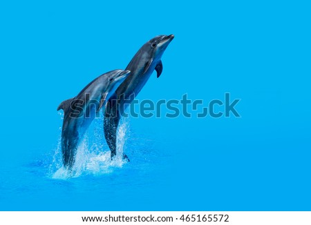two wild dolphins playing