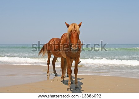 Wild horses on beach stock images royalty free images vectors two wild horses on the beach near the ocean sciox Images