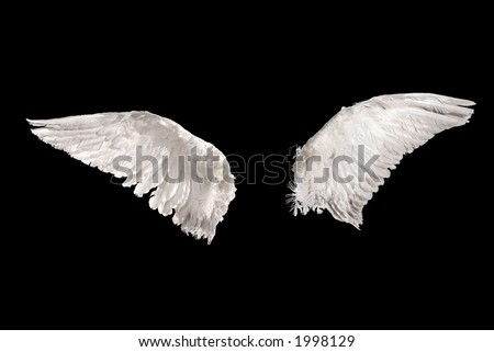two wings isolated on black background - stock photo