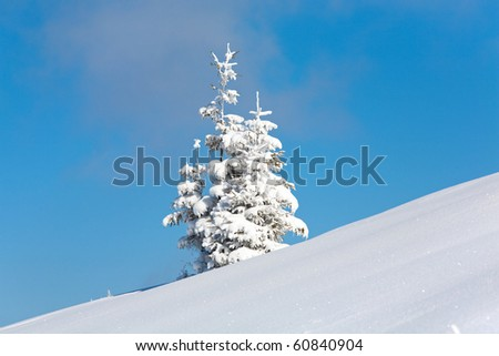 Two winter lonely snowy fir trees on mountainside on blue sky background - stock photo