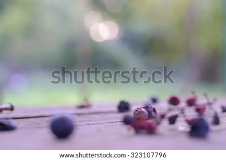 Two withered grape berries artistic selective soft focus background, only one in full focus, rest blurred - stock photo
