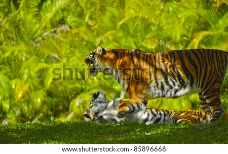Two Young Bengal Tigers against bright green palm tree leaf background