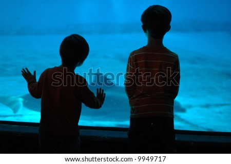 Two Young Boys Watching Dolphins in an Aquarium