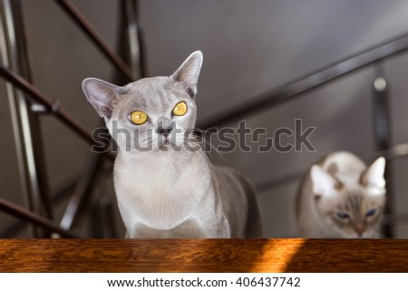 Two young cats hiding behind the stairs