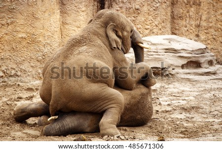 Two young elephants playing together in a zoo