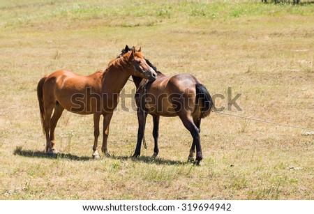 Two young embracing horses on the pasture next to each other.