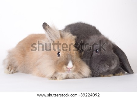 two young rabbit, isolated