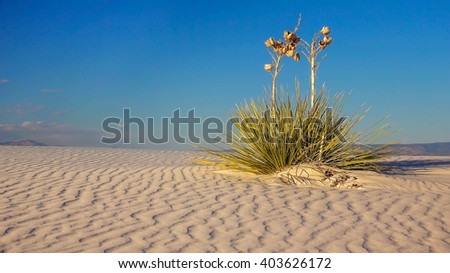 Two Yucca plants sit on a a rippled sand dune in White Sands National Monument in New Mexico - stock photo