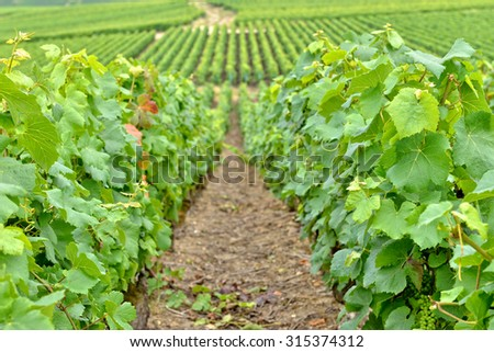 Typical agricultural landscape in Champagne-Ardenne, France - stock photo