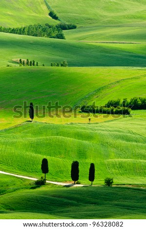 Typical cypress scenery with beautiful green for Tuscany, Italy - stock photo