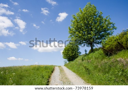 Typical Czech road in a countryside with a tree in blossom and the blue sky
