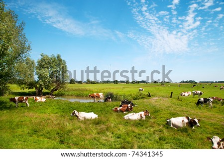 Typical Dutch landscape with cows in the pastures - stock photo