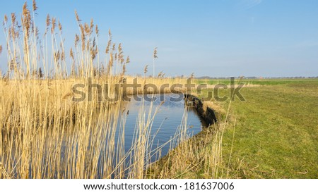 Typical Dutch landscape with reed batch in the water - stock photo