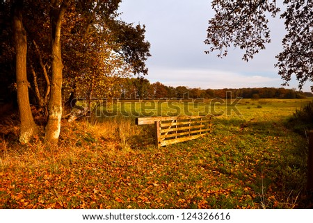 typical Dutch rural landscape in autumn sunny day