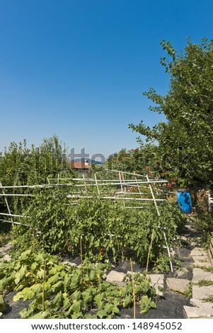 Typical italian homemade vegetable garden - stock photo