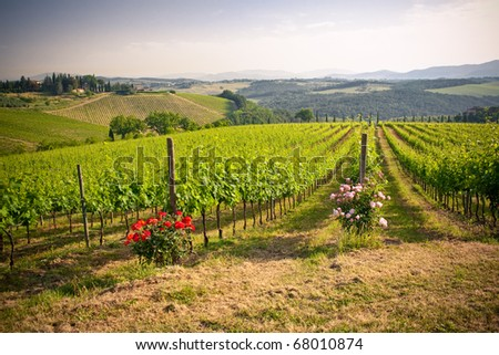 typical landscape in Italian region Tuscany - stock photo