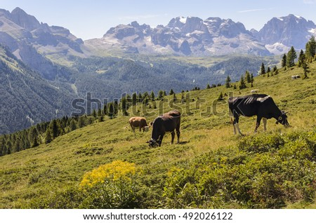 Typical mountain landscape with grazing cows.