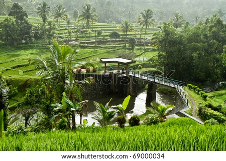 typical terrace rice fields of Bali, Indonesia - stock photo