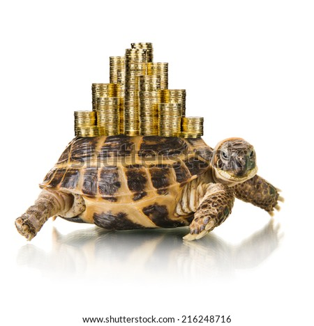 typical tortoise whith many gold coin , on white background; isolated, close up - stock photo