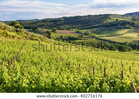 Typical Tuscan landscape with vineyards near San Gimignano-Italy - stock photo