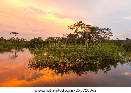 TYPICAL VEGETATION ON LAGOON GRANDE, CUYABENO NATIONAL PARK, ECUADOR, SUCUMBIOS PROVINCE  - stock photo