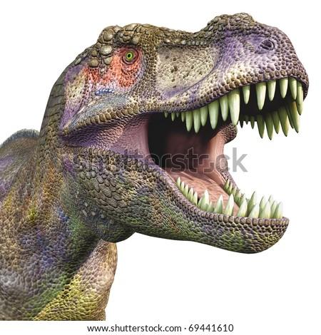 tyrannosaurus huge head - stock photo