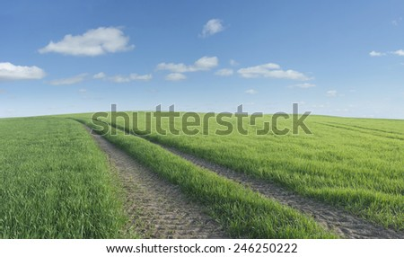 Tyre tracks in a summer field. - stock photo
