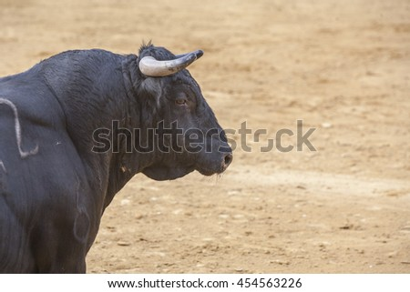 Ubeda, SPAIN - October 2, 2010: Capture of the figure of a brave bull of hair black color in a bullfight, Spain