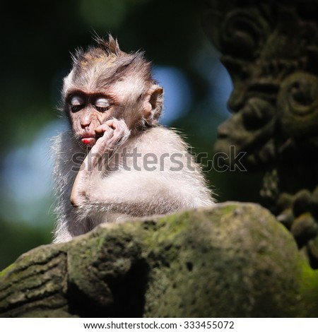 Ubud Monkey Forrest in Bali - stock photo