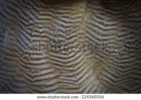 ufous-legged owl feathers close to the belly - stock photo