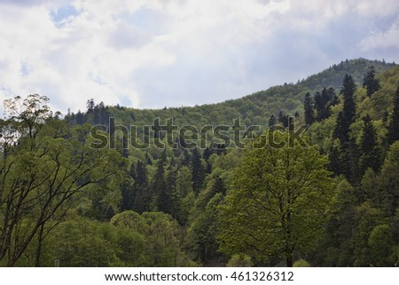 Ukrainian Carpathian mountains, covered with dense forests