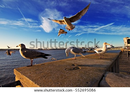 Ultra wide angle view of seagulls by the sea