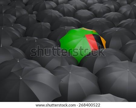 Umbrella with flag of zambia over black umbrellas - stock photo