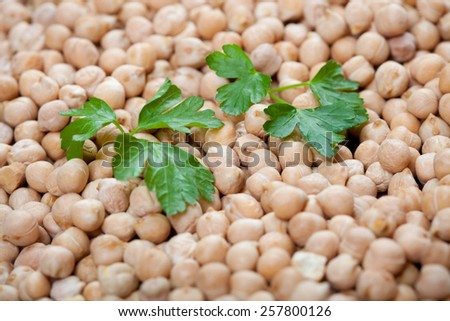 uncooked chick peas with fresh parsley on top - stock photo