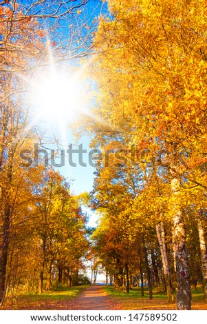 Under Sun Forest Landscape  - stock photo