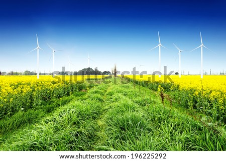 Under the blue sky wind turbines, in the vast expanse of canola flower in.