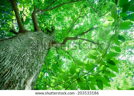 Under the canopy of one of the largest of the magnolias. - stock photo