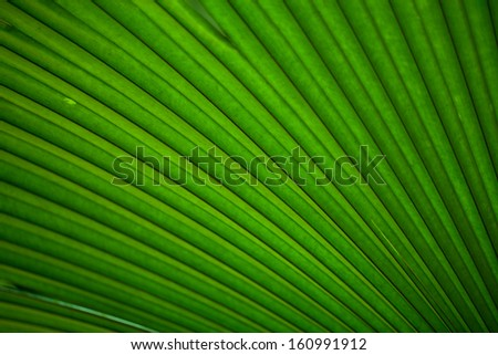 under the green leaf - stock photo