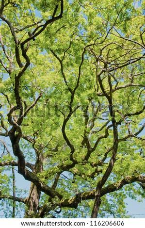 Under the tree - stock photo