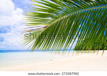 Under Trees Island Lagoon  - stock photo