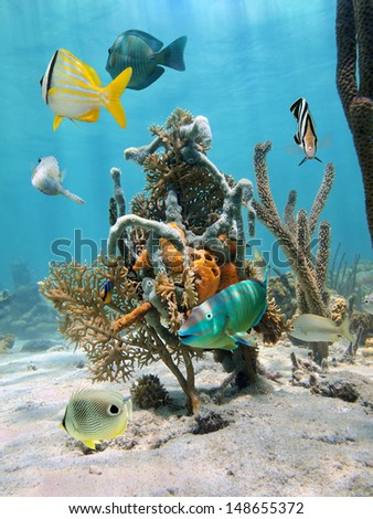 Under water marine life with tropical fish and colorful sea sponges fixed on coral, Caribbean sea - stock photo