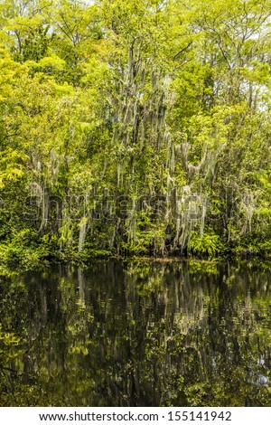 undergrowth and roots of green Mangrove trees In the Everglades National Park - stock photo