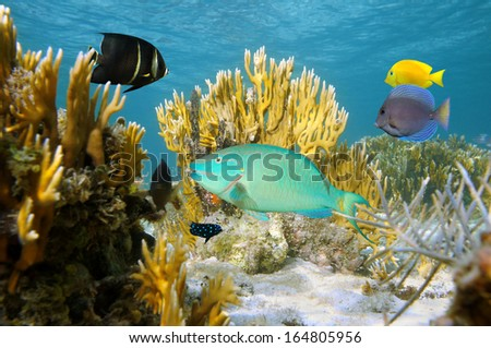 Undersea scene with colorful tropical fish in a coral reef, Atlantic ocean, Bahamas islands