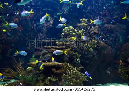 undersea world - stock photo