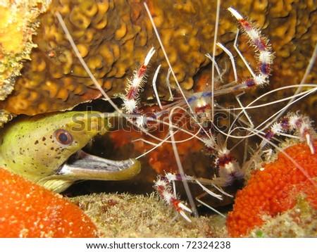 underwater - stock photo