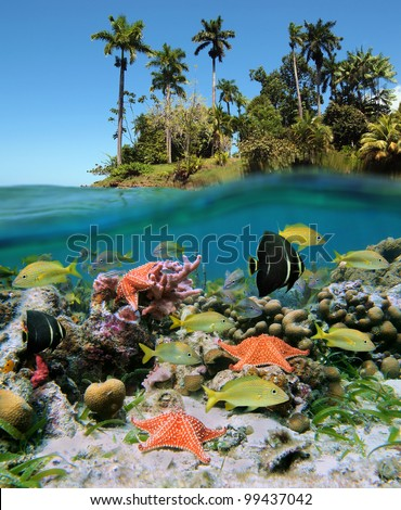 Underwater and surface split view in the tropics with colorful fish and starfish in a coral reef, above waterline, beautiful vegetation on an island - stock photo